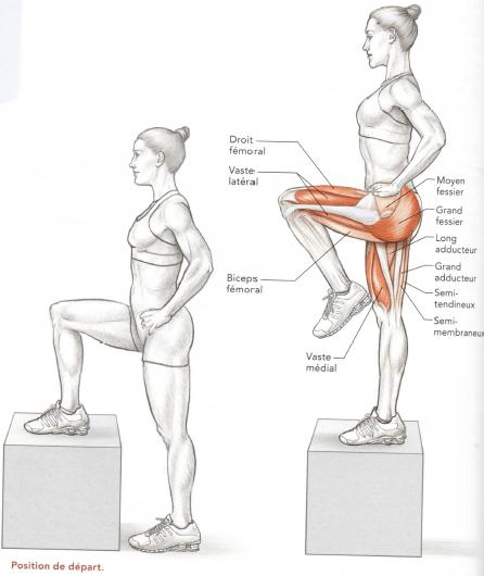 Montée sur un banc, travail des quadriceps